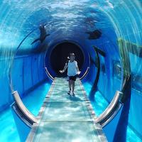 Eyecatch_Aquarium