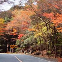Eyecatch_Kamakura_Koyo_Drive