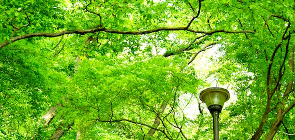 Header_Category_venues_parks-gardens