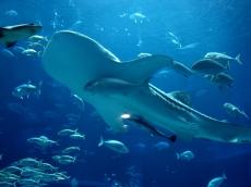 Photo_Aquariums