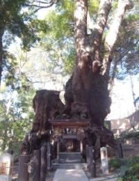 Kinoyama Shrine