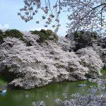 Chidorigafuchi, Kitanomaru Park