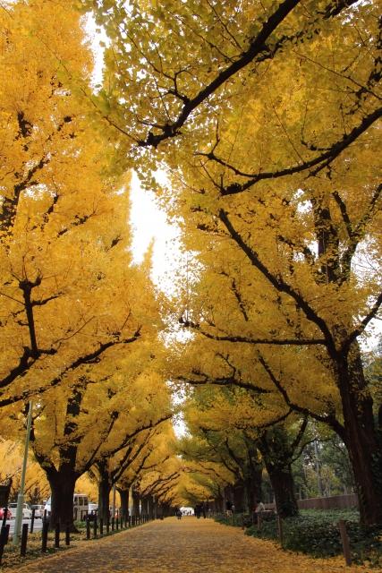 Photo_JinguGaien_AutumnLeaves