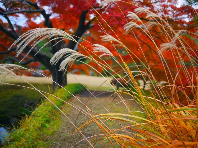 Rikugien Garden in Autumn