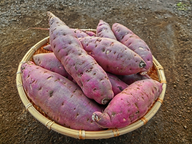Satsumaimo (Sweet Potato)