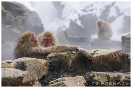 Nagano Jigokudani Monkeys
