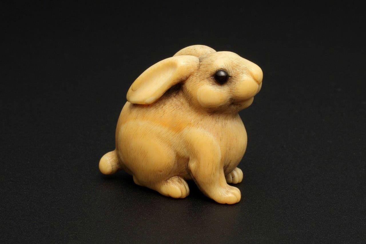 sagemonoya rabbit