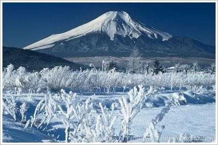 Yamanashi Mt. Fuji